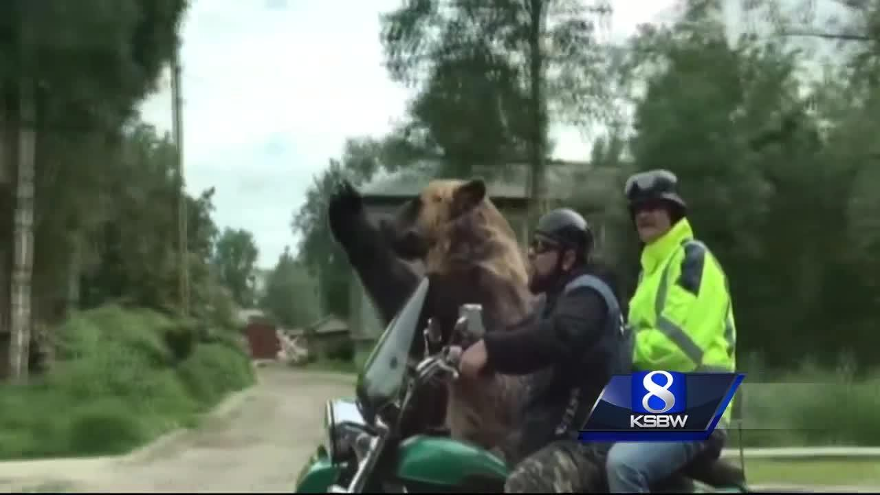 Animal Stories with Dan Green: it's a bear in a side car