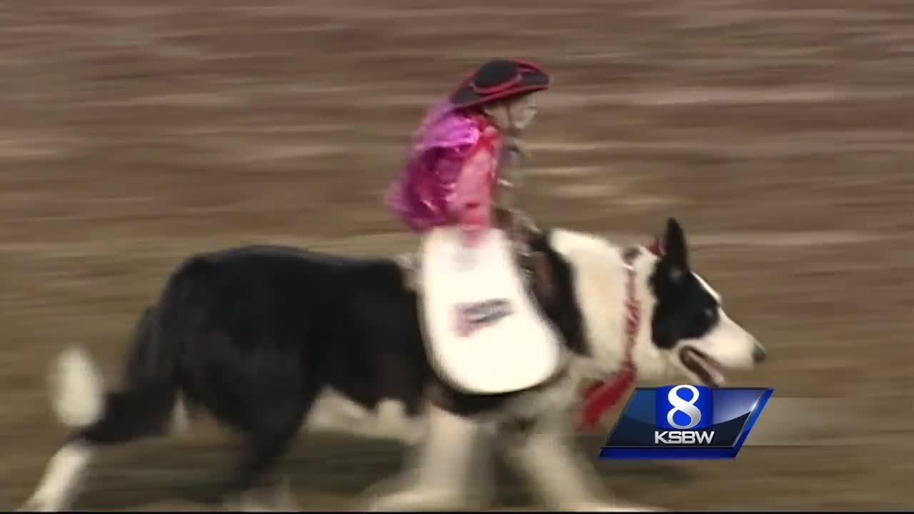 Whiplash the Cowboy Monkey comes to the California Rodeo Salinas