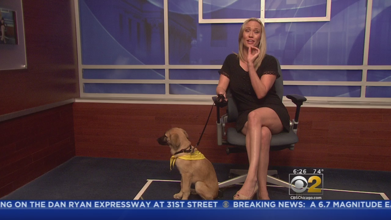 PAWS Pet Of The Week: Paisley