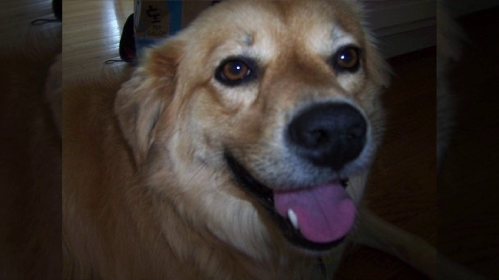 'Lucky' Dog That Survived Hurricane Katrina Goes Missing