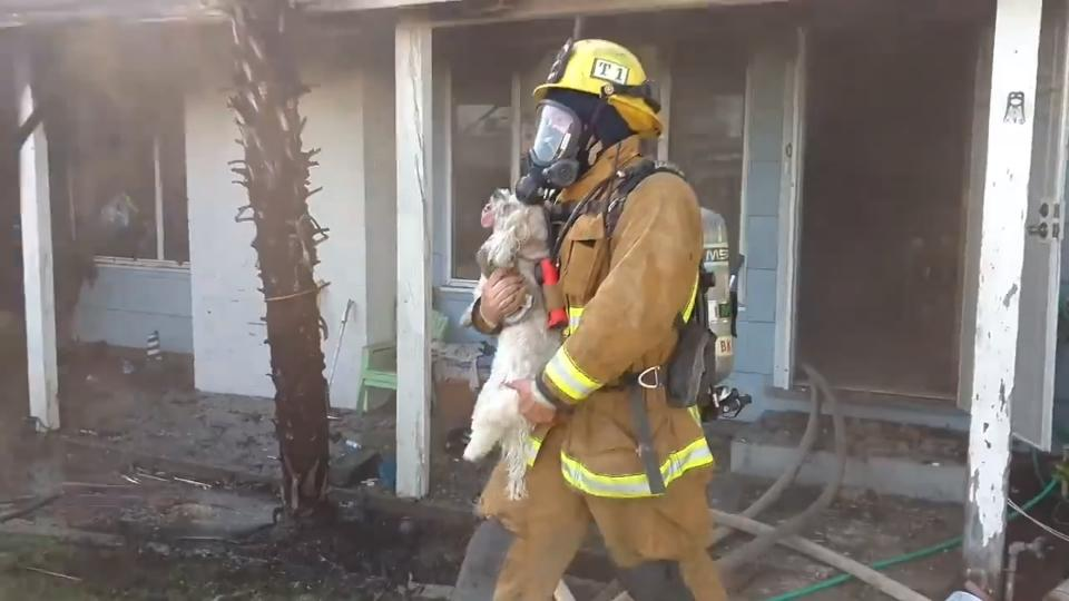 California firefighters revive dog with an oxygen mask
