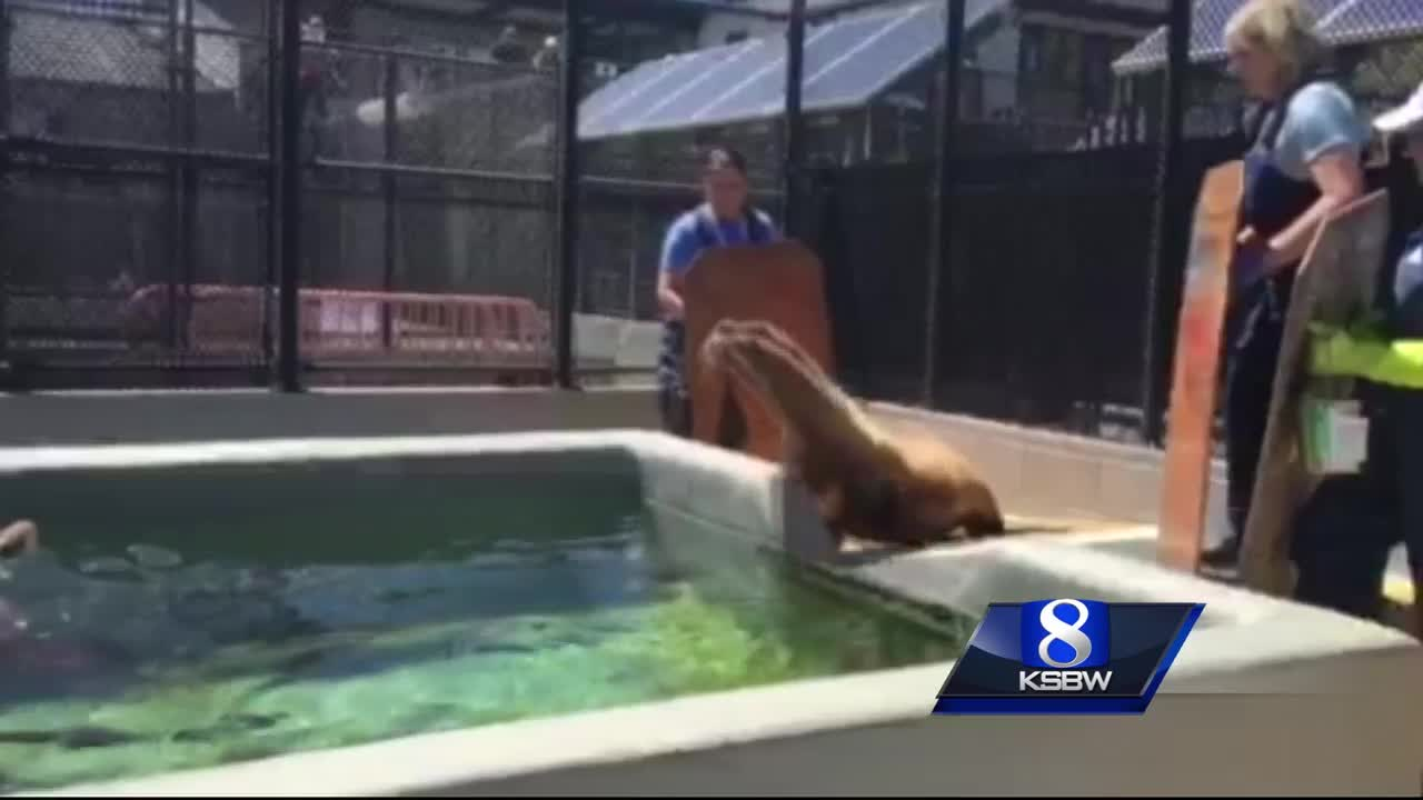 Sick sea lions are washing up on San Luis Obispo County beaches