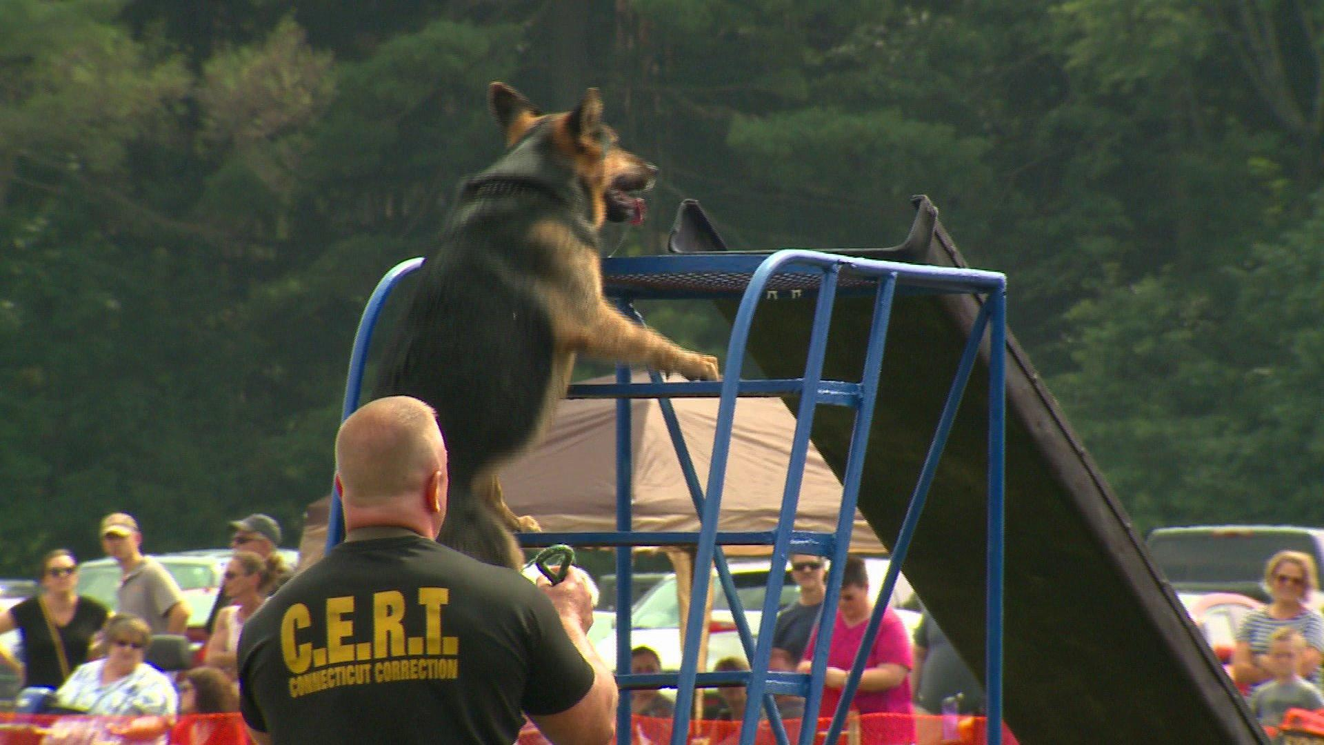 Law Enforcement, Four-Legged Friends Gather For Connecticut Police K-9 Olympics