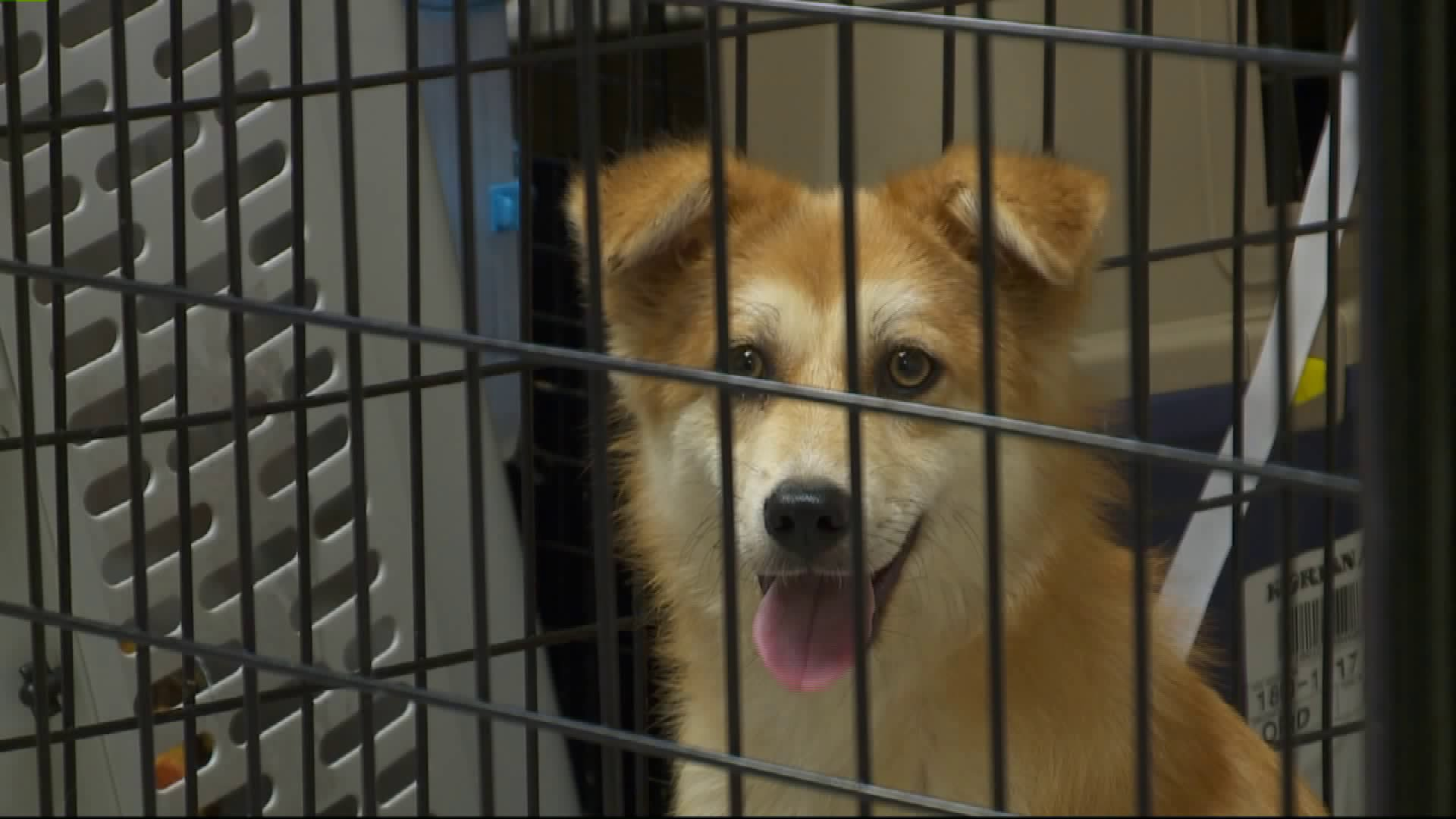 Dogs Rescued from South Korean Meat Farm Arrive in Wisconsin
