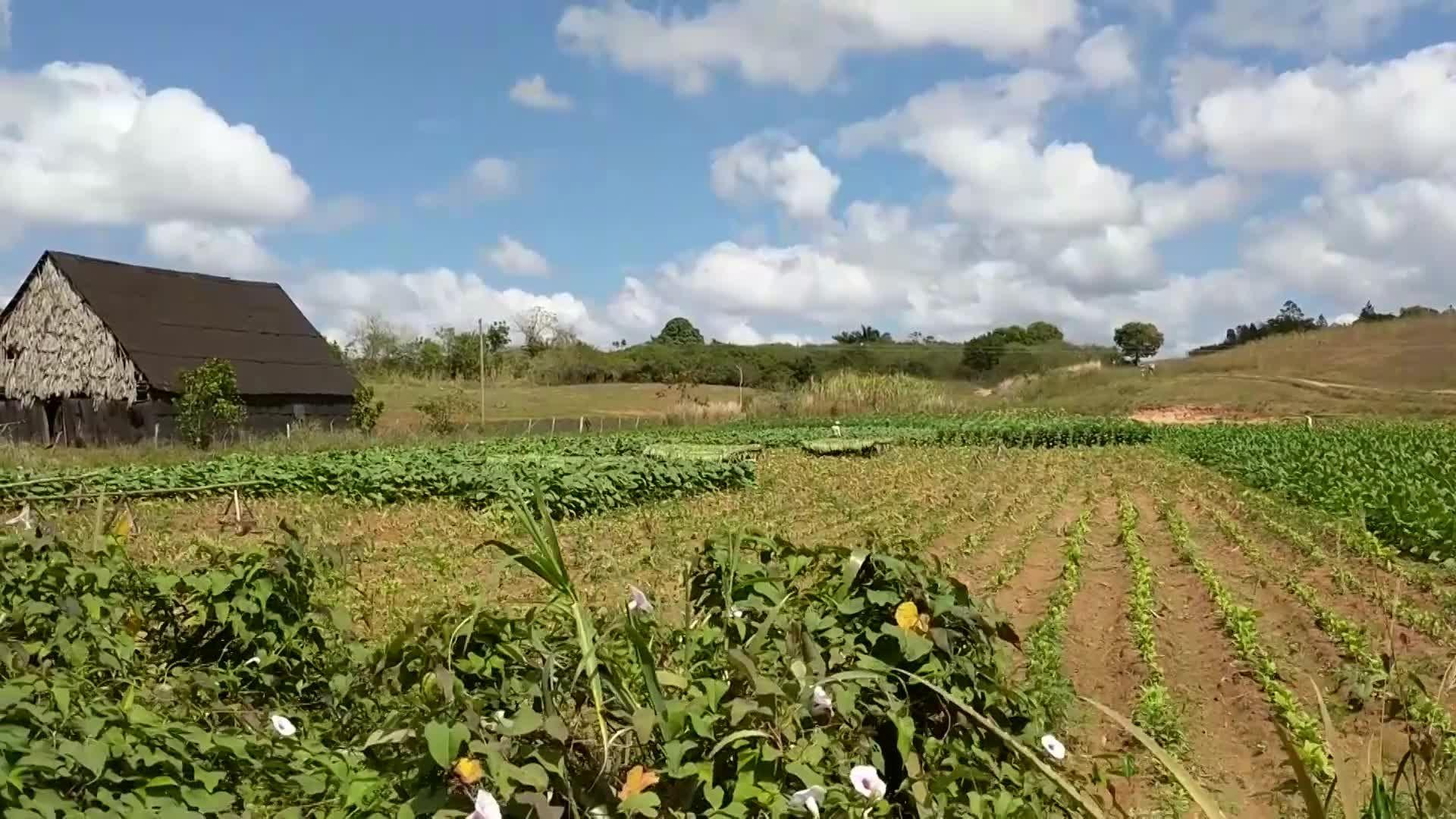 A Road Trip Through Cuba's Tobacco Country