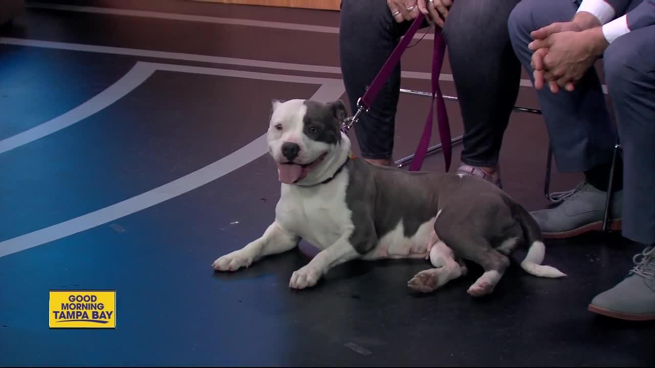 Pet of the week: Tina a sweet 2-year-old lady with a heart of gold