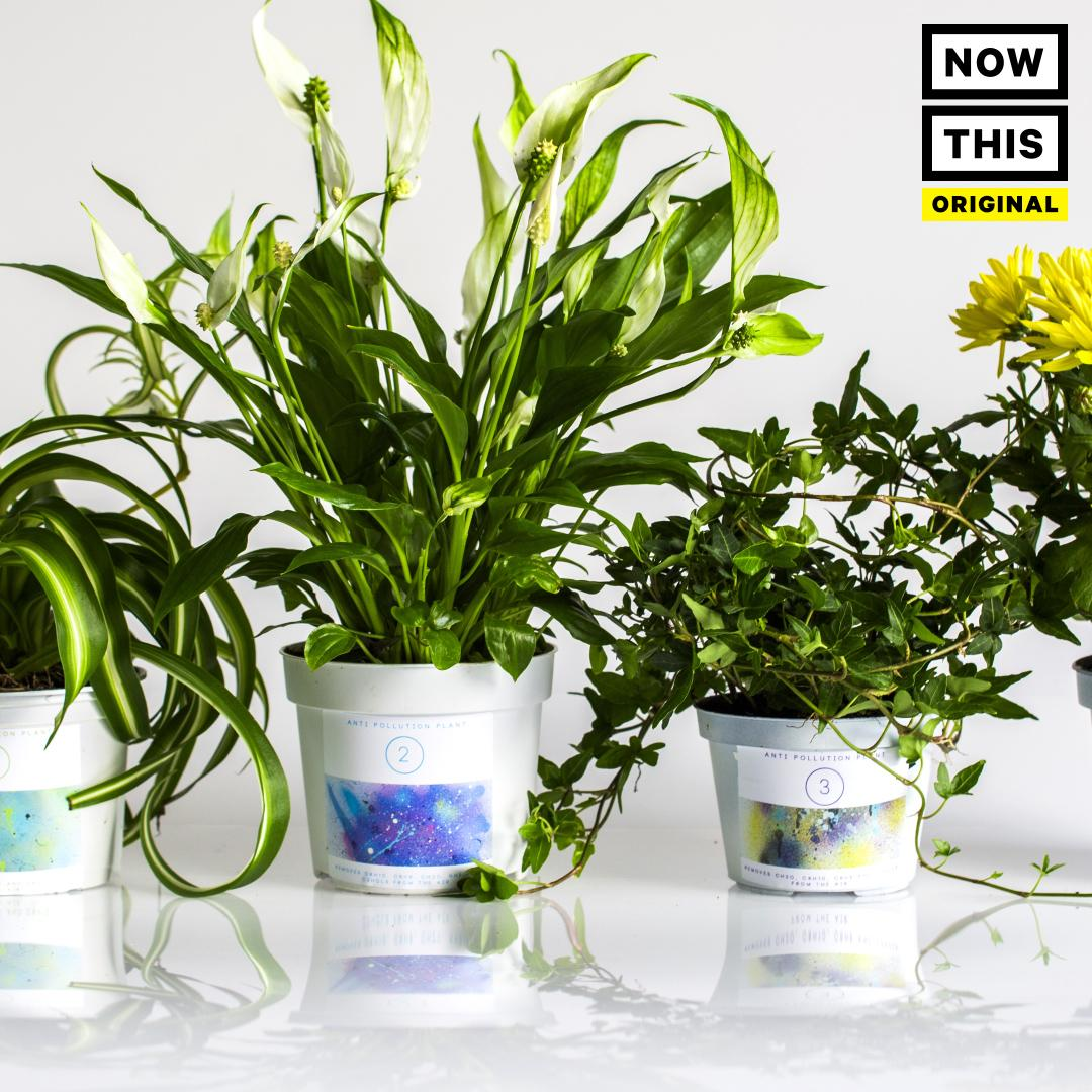 Plants Keep Your Home Pollution-Free