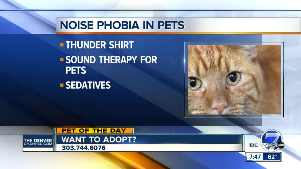 Pet of the day for August 19th