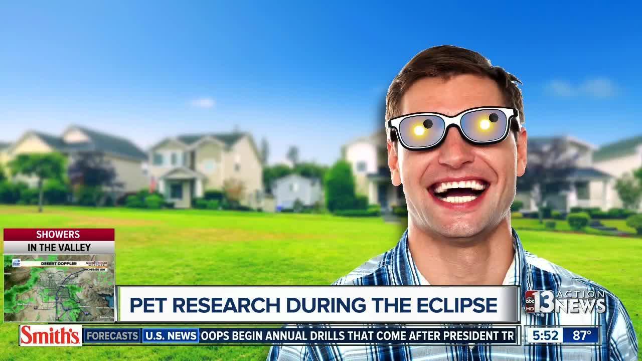 pets eclipse