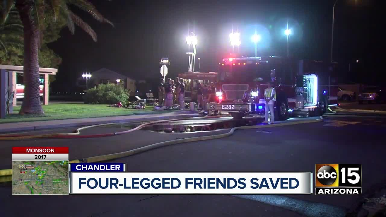 Woman grateful for firefighters for saving pets