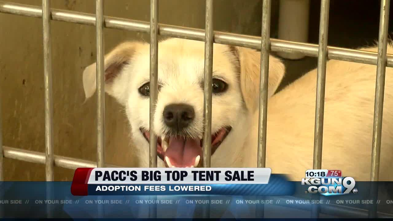 PACC lowers adoption fees for Big Top Tent Sale