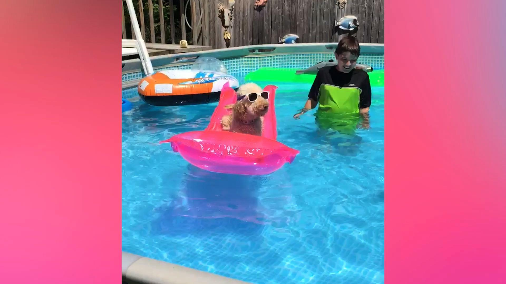 Dogs Swimming, Epic POV Slow Motion Shot