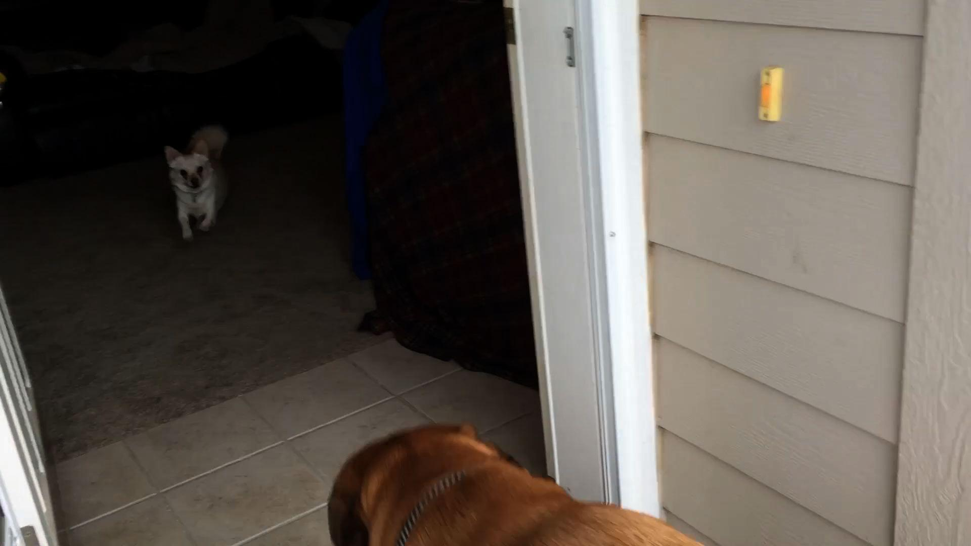 Giant Dog Vs. Tiny Dog