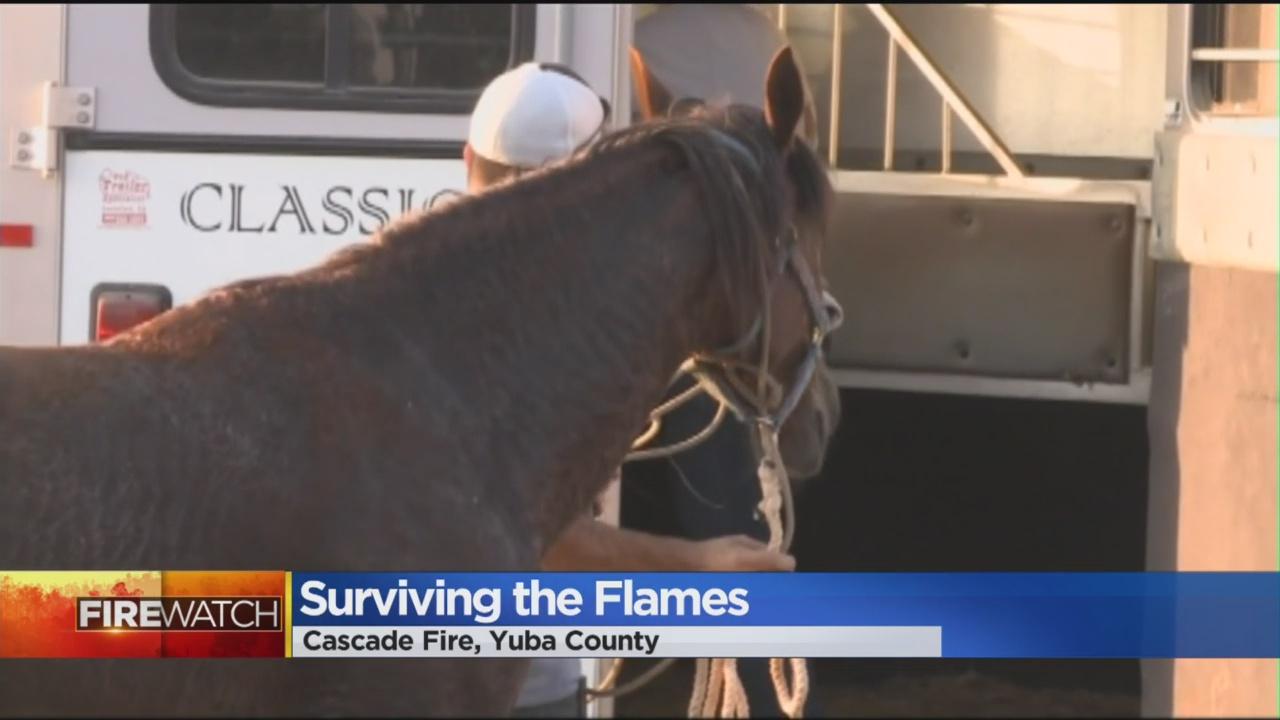The Cascade Fire: Survivng The Flames