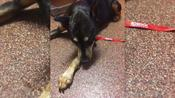 Woman Learns Dog is Alive, Living With Vet Tech Five Months After She Thought He Was Put Down