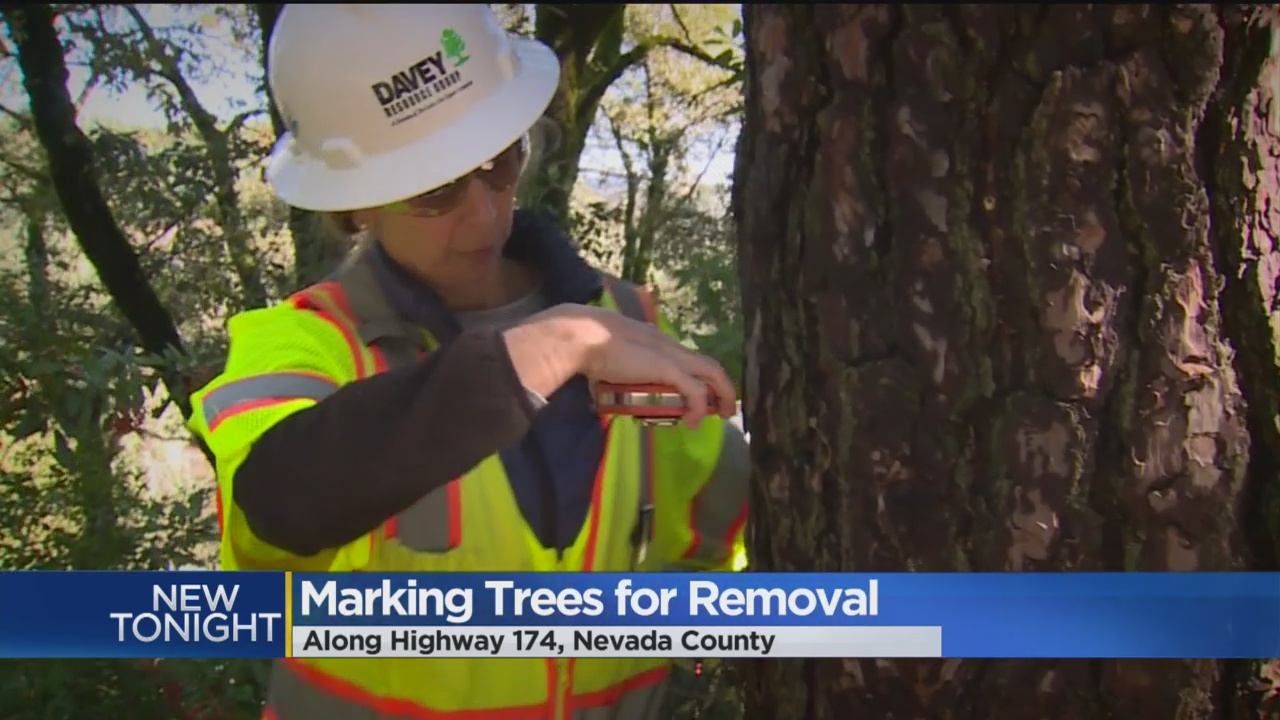 Caltrans Working To Remove Dead Trees Along Sierra Highways
