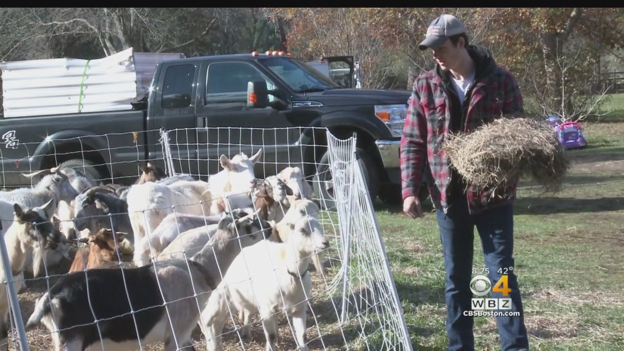 Livestock Sitter Watches South Shore Goats, Chickens While Owners Are Away