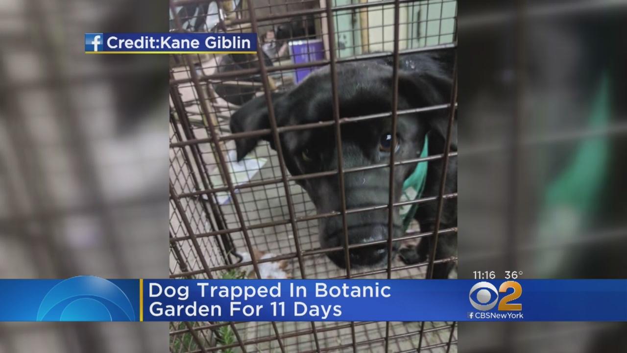 Missing Dog Found In Brooklyn