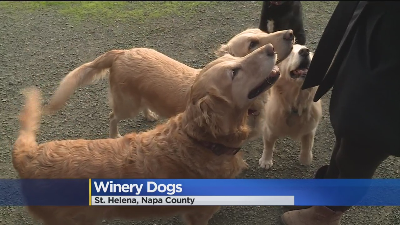 New Book Highlights Winery Dogs