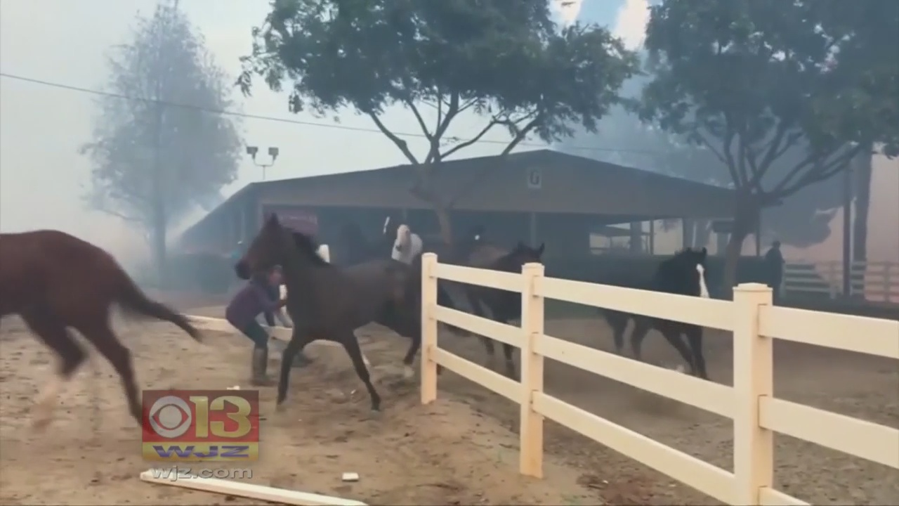 Horse Deaths In California Fires Have Md. Racing Community Talking About Safety