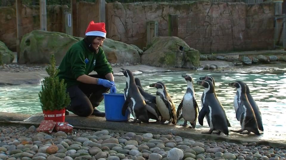 Animals celebrate Christmas at London Zoo