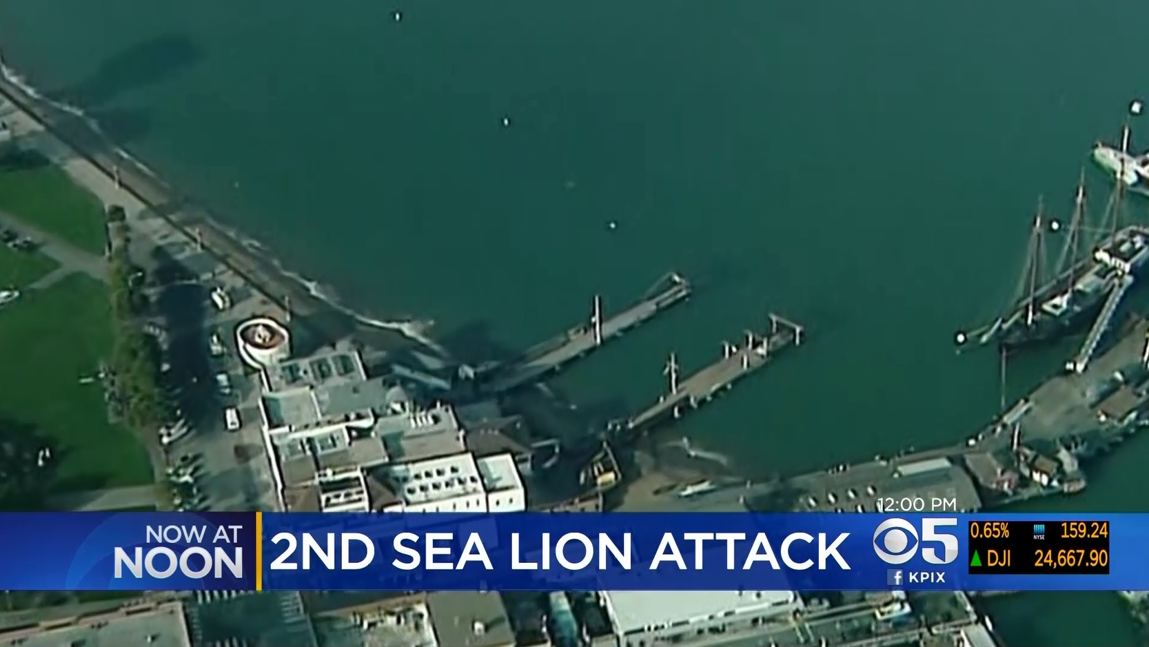 2nd Swimmer In 24 Hours Attacked By Sea Lion Off San Francisco Aquatic Park