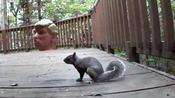 Donald Trump Head Squirrel Feeder