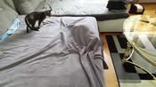 Cat Plays With Another Cat Hiding Under Bedcovers