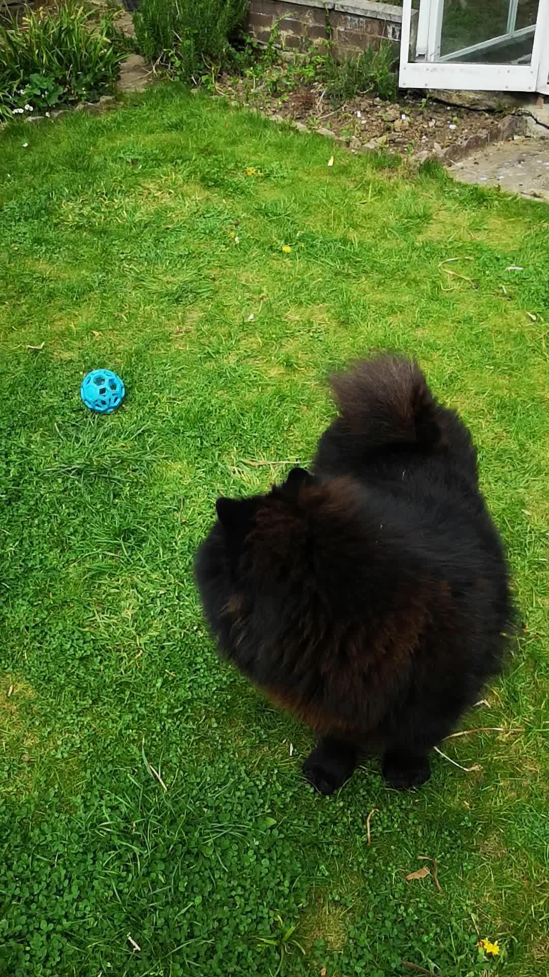 ORGANIC WHEAT GRASS 6000 SEEDS CAT//RABBIT//DOG//BIRD//TURTLE /& HUMANS FRESH 2018