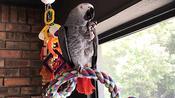 Talking parrot plans out lovely dinner buffet
