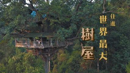 鏡食旅》住進世界最大樹屋 寮國雨林探險
