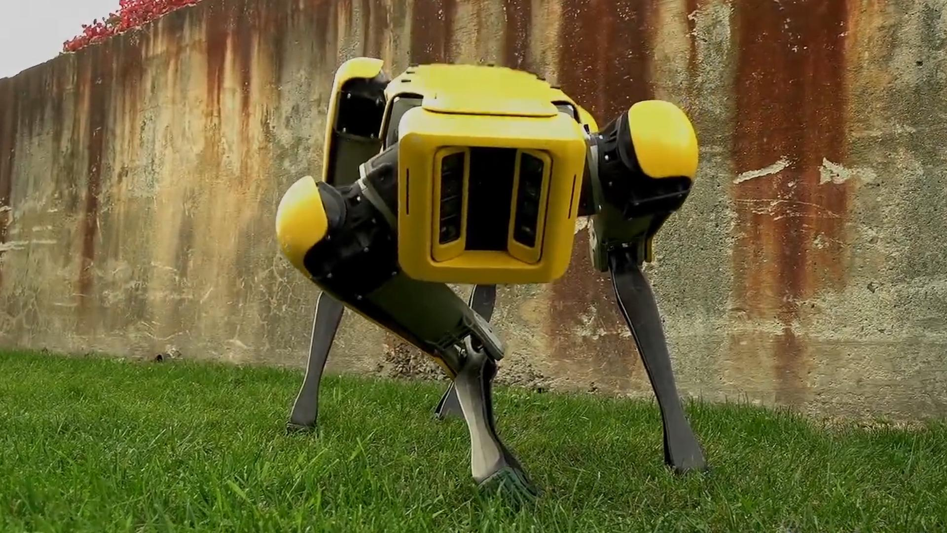 This sophisticated robot dog could be in your home sooner than you think