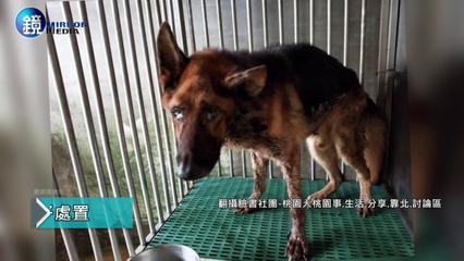 鏡週刊 鏡爆社會》警犬訓練師虐犬致歉又刪文 動保團體:再幫你發一次