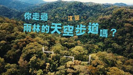 鏡食旅》你走過汶萊雨林的天空步道嗎?