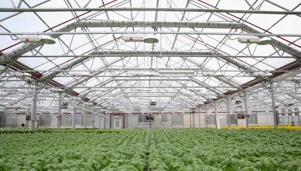 Built in Brooklyn:ニューヨークの都心ブルックリンで無農薬野菜を作るGotham Greens