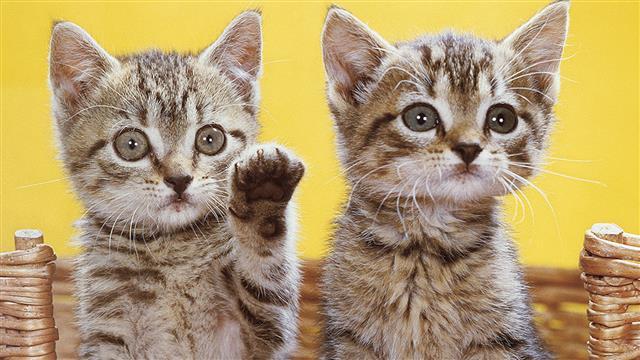 Get the Best Cat Photos: An Expert's Tips
