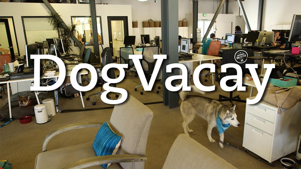 DogVacay's Fur-Ociously Fun HQ | TC Cribs