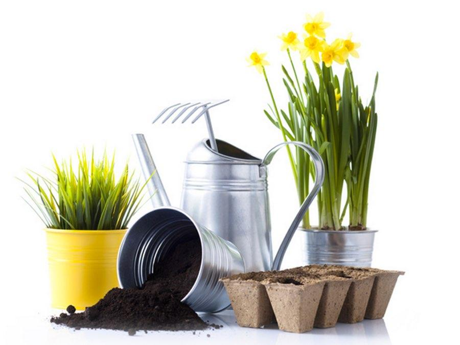 3 Easy Ways to a Green Thumb