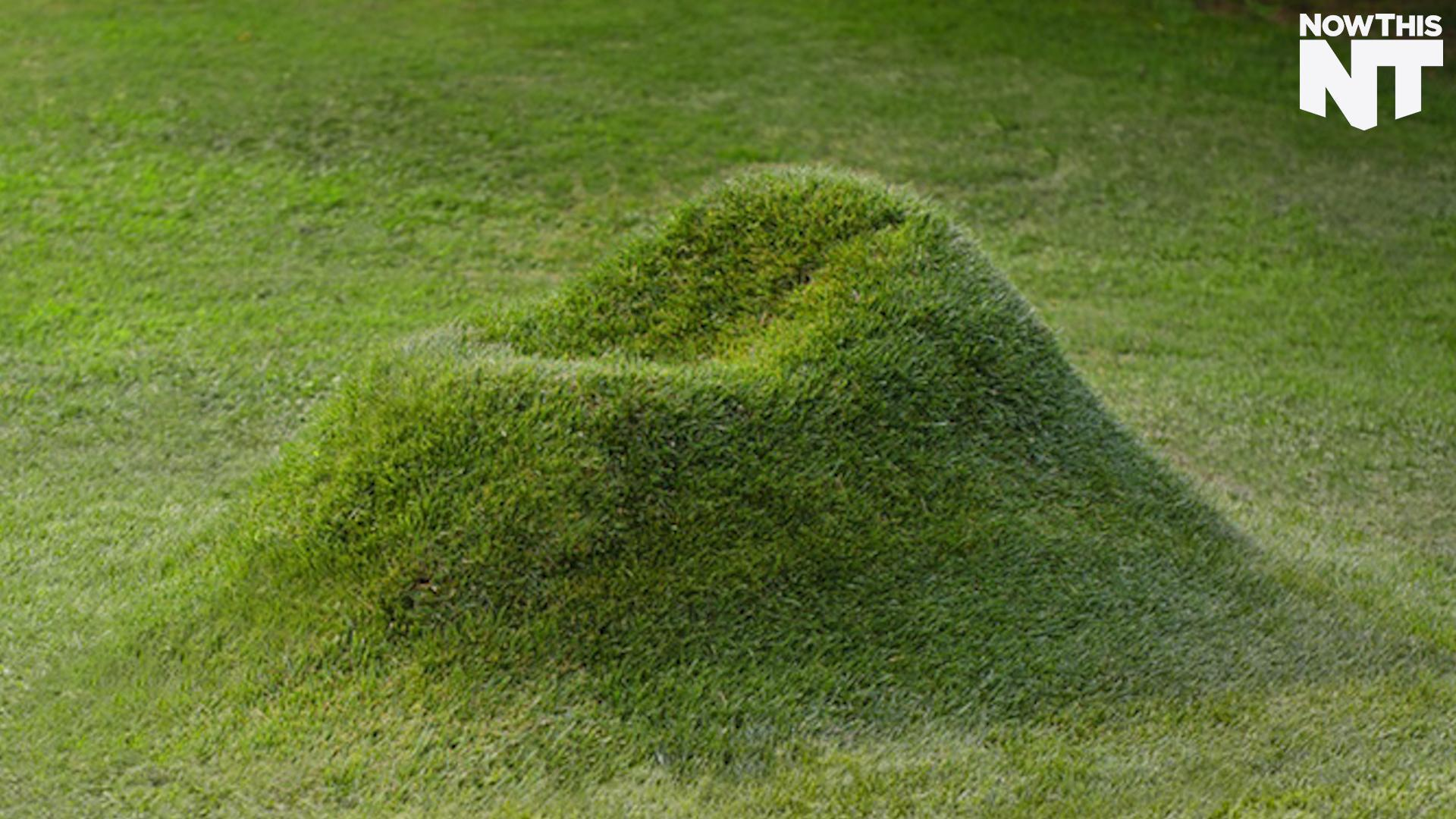 You Can Grow an Armchair Right out of the Ground