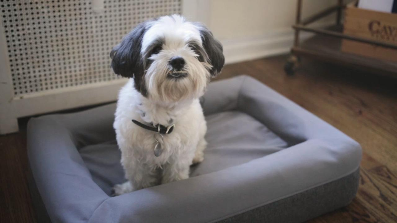 Casper's new mattress for dogs