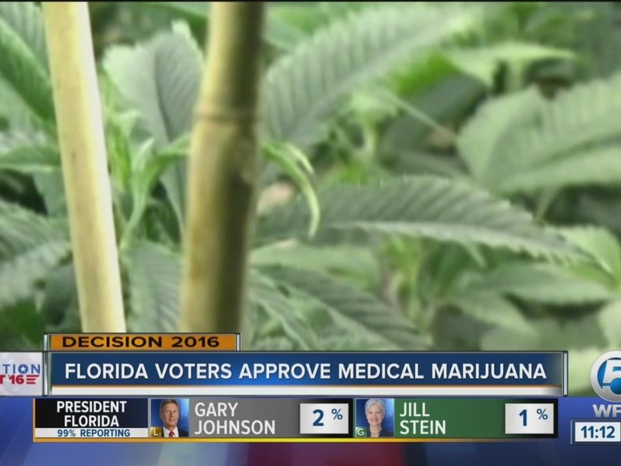 Marijuana legalization Florida 2016: Here's what you need to know about Amendment 2