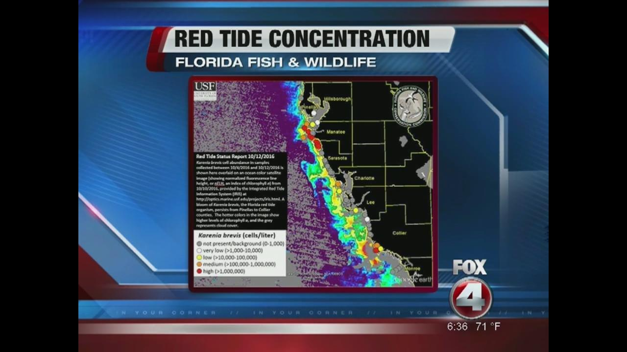 Red tide levels rise in southwest florida fox 4 now wftx fort red tide levels rise in southwest florida fox 4 now wftx fort myerscape coral geenschuldenfo Gallery