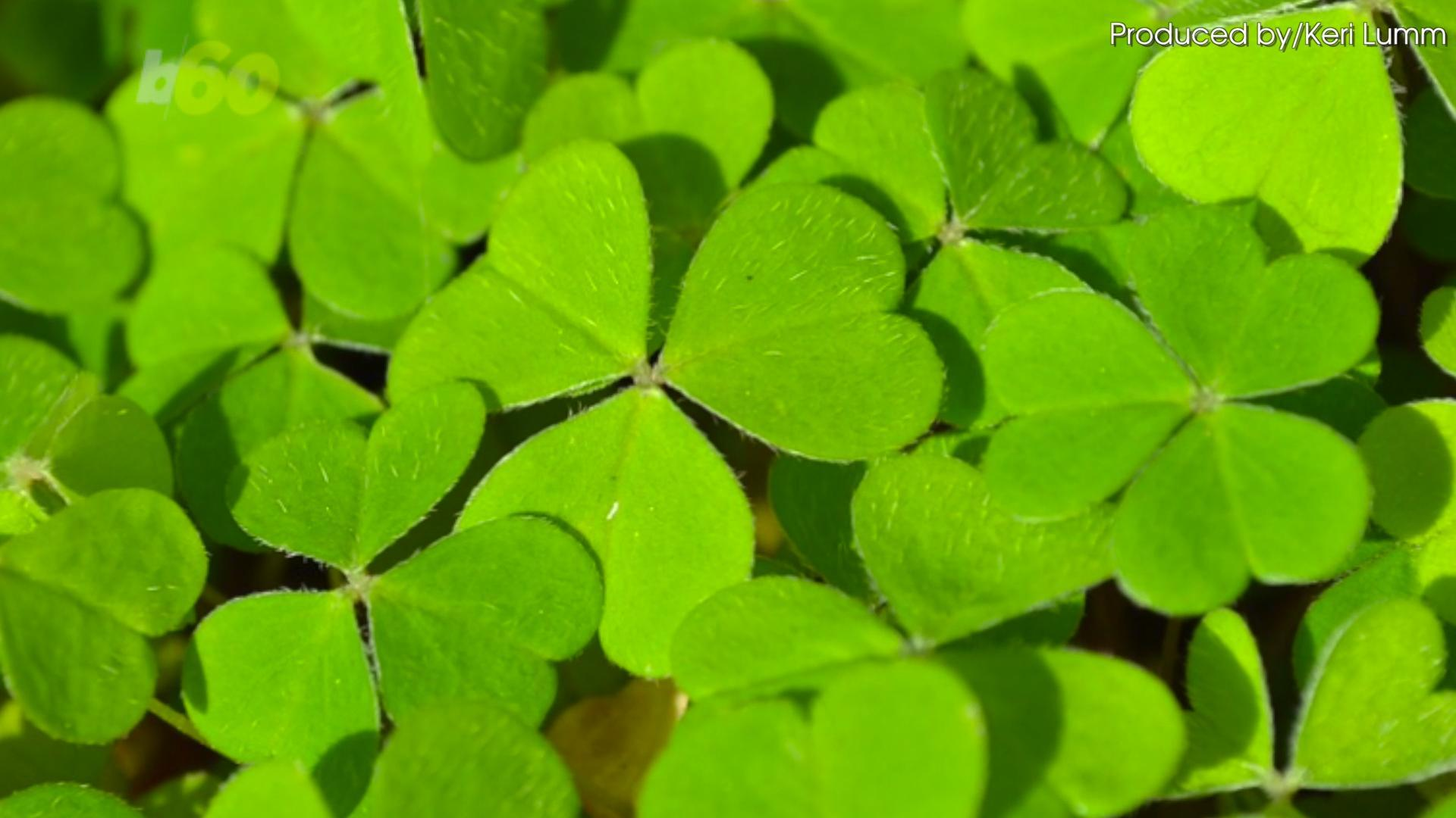 Naturally Green Foods for Your St. Patrick's Day Menu