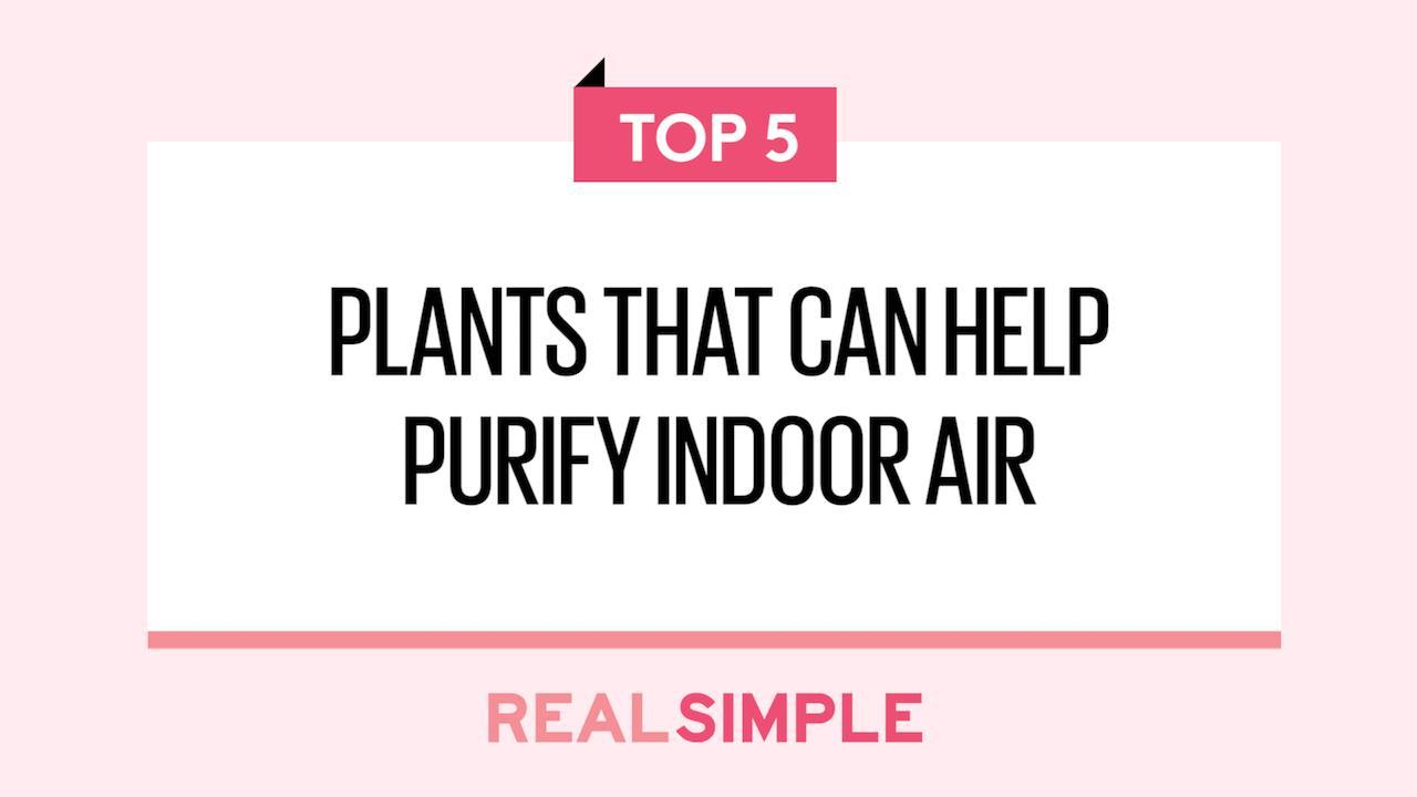 5 plants that are as well-suited to apartment living as you are
