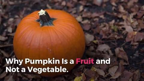 Why Pumpkin Is a Fruit and Not a Vegetable