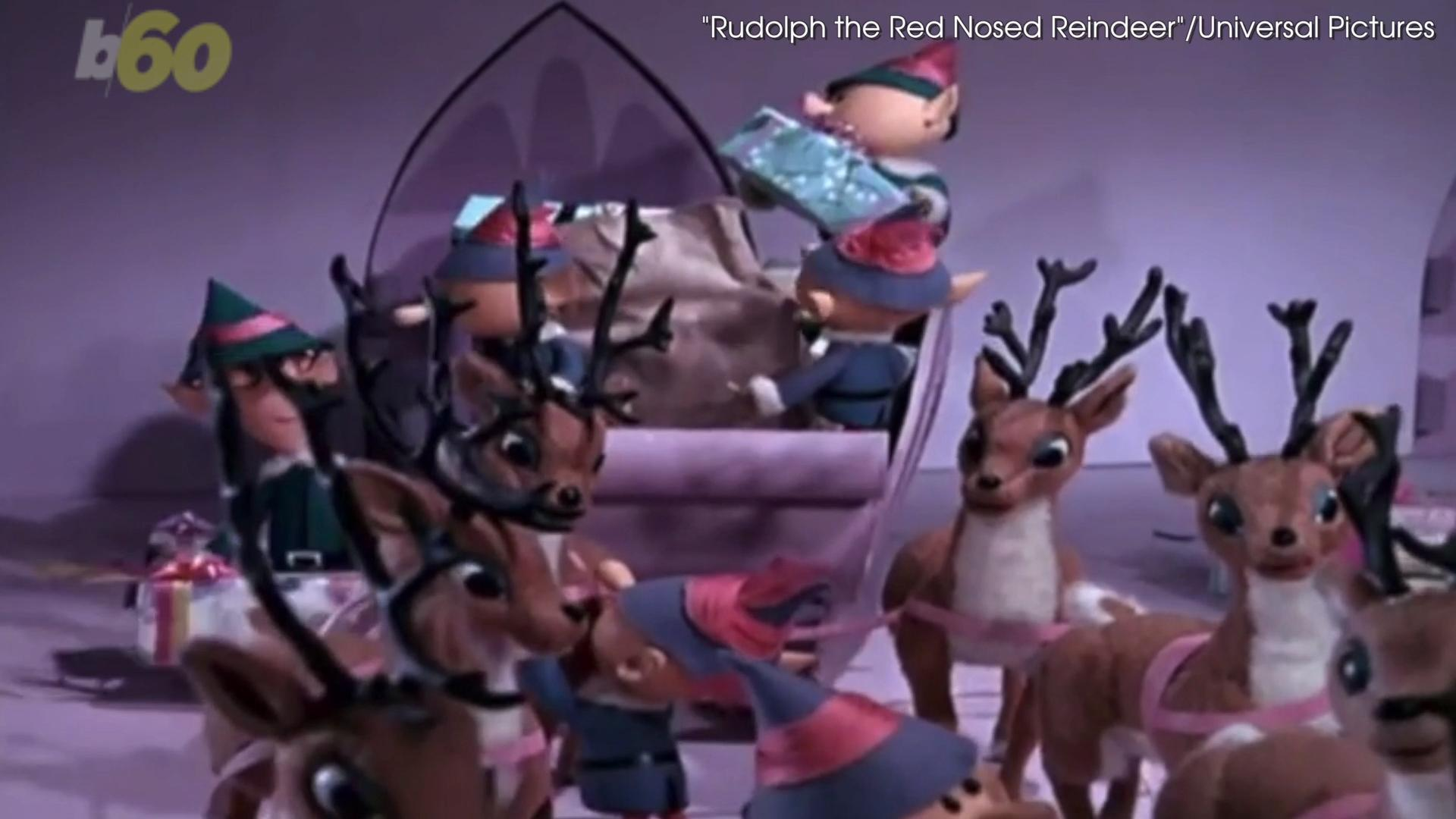 santas reindeer are all female zoologists say - Pictures Of Reindeer