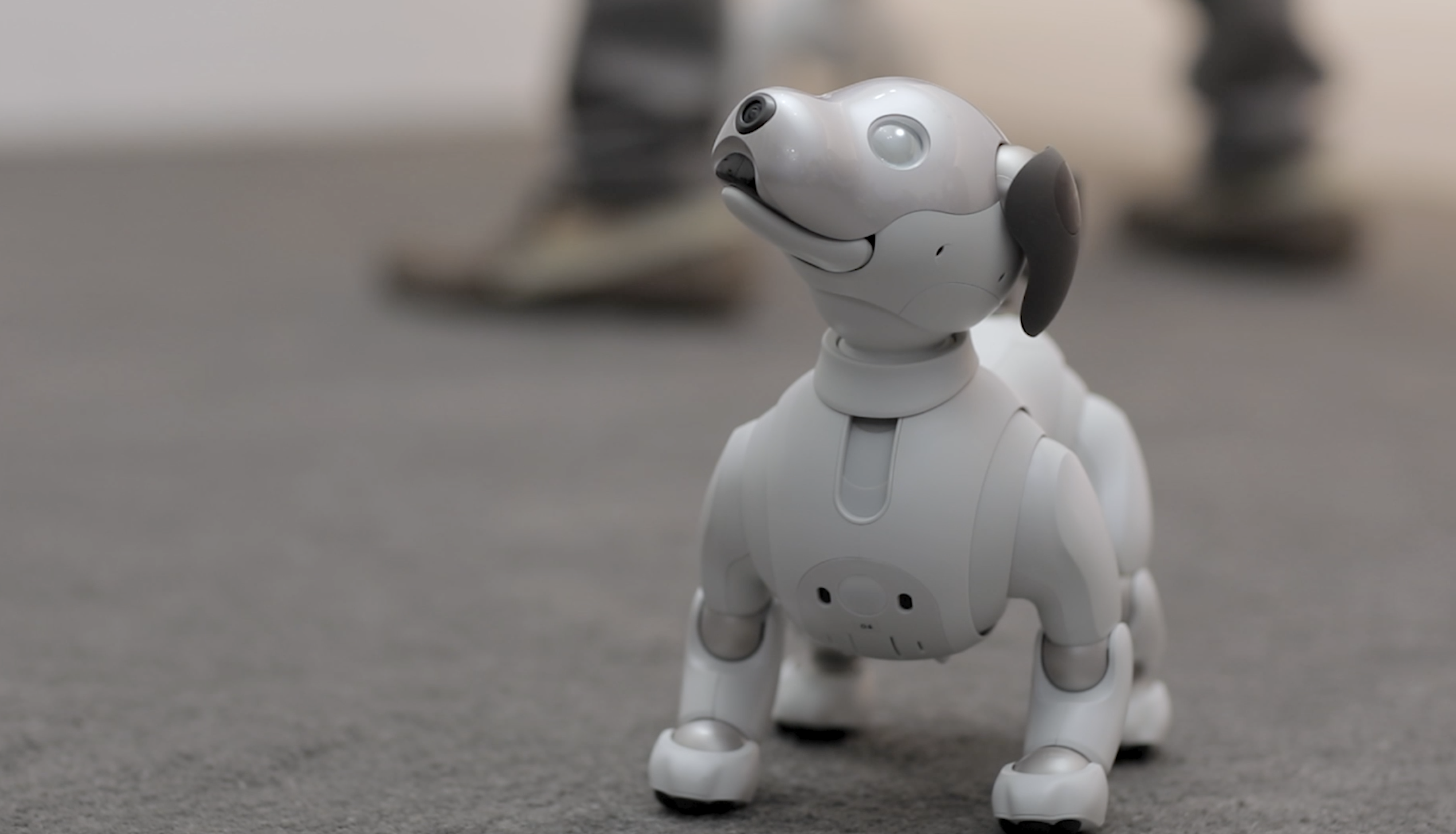 Sony COO talks Aibo and CES favorites