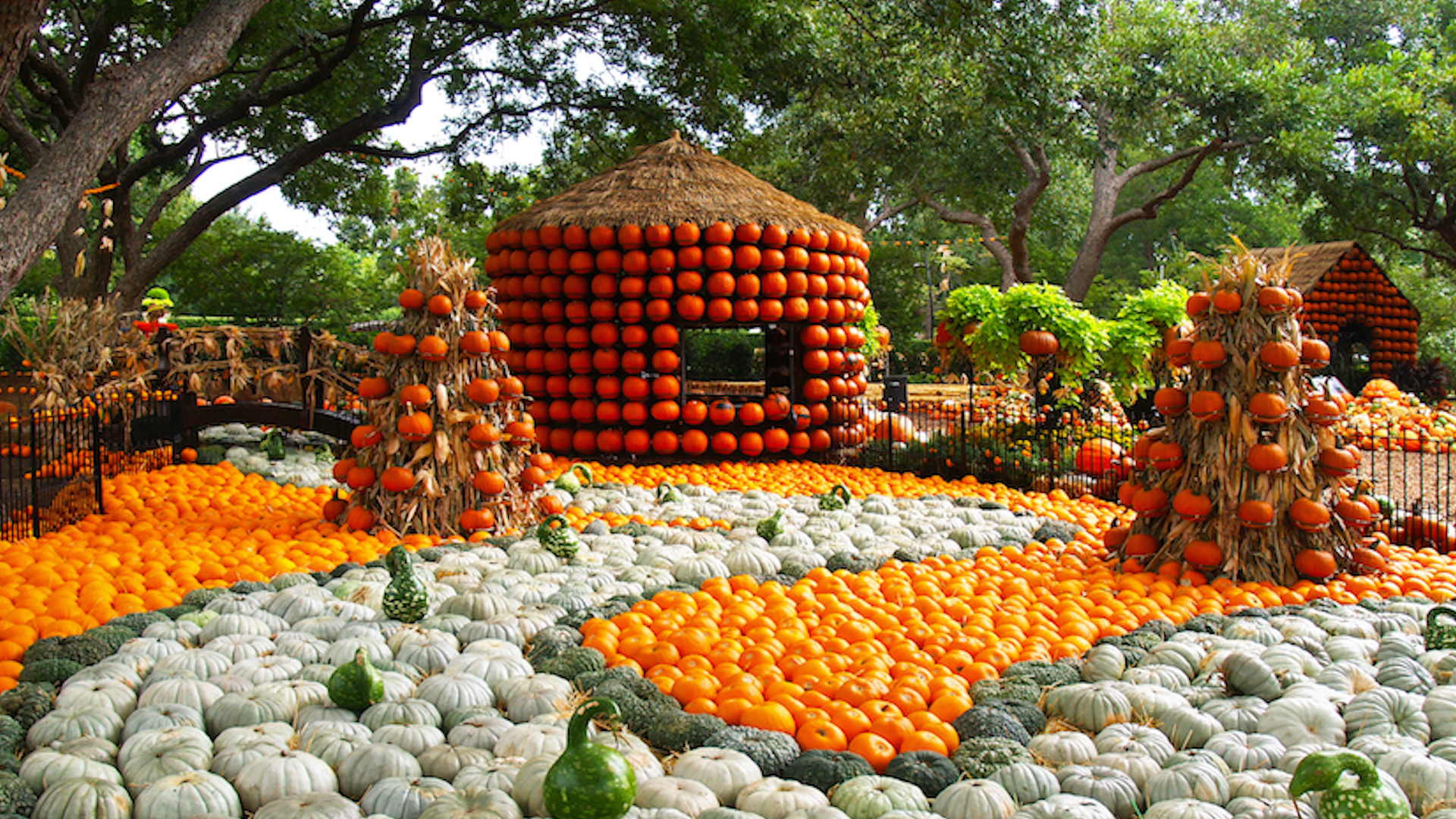 This Pumpkin Village in Dallas Looks Absolutely Incredible