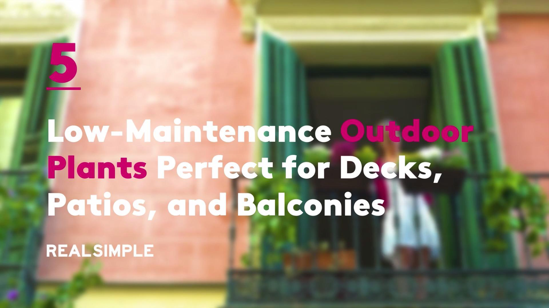 5 Low-Maintenance Outdoor Plants Perfect for Decks, Patios, and Balconies