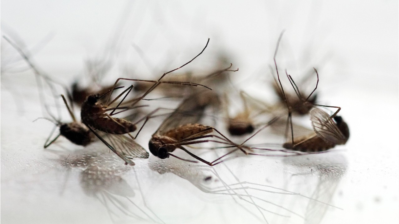 What Is West Nile Virus? Symptoms, Treatment And What You Need To Know